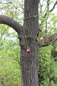 I love you, tree. I mean it